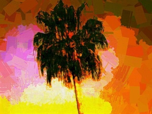 palms-600x450.jpg