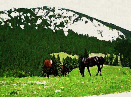 Horses - Oilpainting