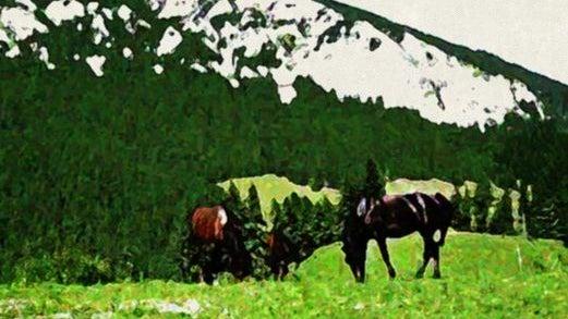 Horses - Oilpainting