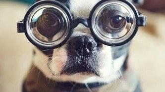 Goggles, Accessories, Accessory, Glasses, Person, Human