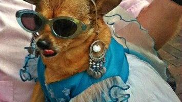 Sunglasses, Accessories, Accessory, Glasses, Clothing, Apparel