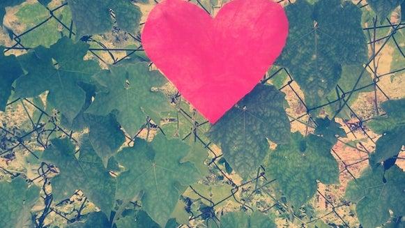 Leaf, Plant, Tree, Flower, Blossom, Heart