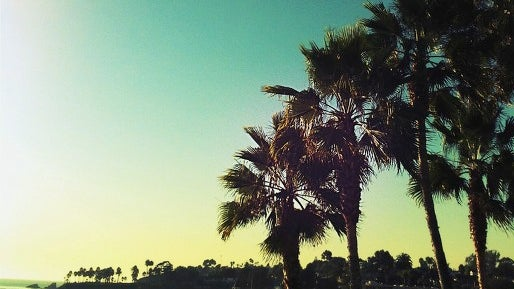 Summer, Outdoors, Nature, Tropical, Palm Tree, Arecaceae