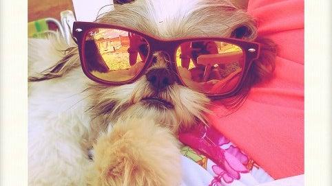 Glasses, Accessories, Accessory, Dog, Mammal, Animal
