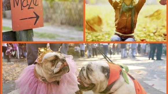 Person, Human, Dog, Animal, Mammal, Canine