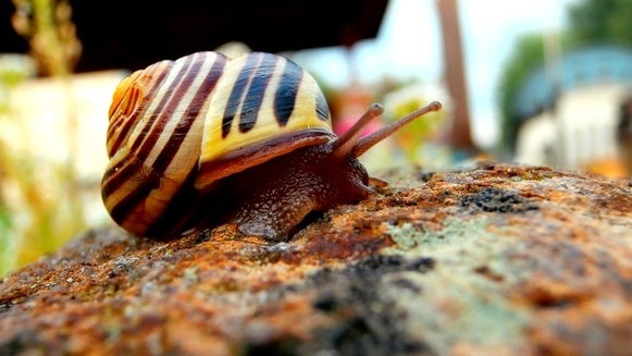 Snail, Invertebrate, Animal, Insect