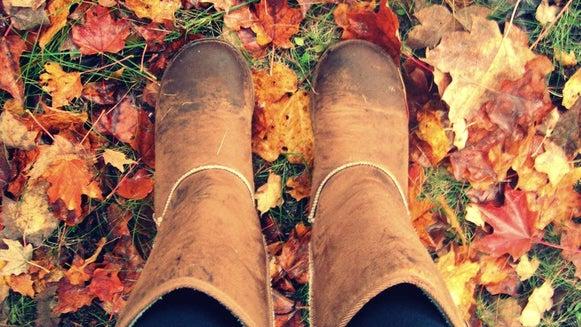 Clothing, Apparel, Leaf, Plant, Footwear, Shoe