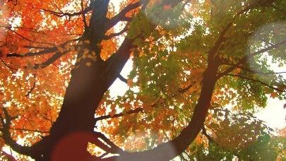 Tree, Plant, Vegetation, Oak, Sunlight, Woodland