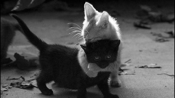 Cat, Pet, Animal, Mammal, Kitten, Black Cat