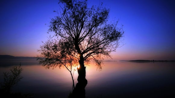 Tree, Plant, Nature, Outdoors, Silhouette, Sky