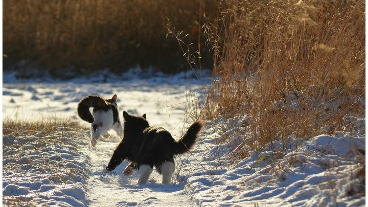 Nature, Outdoors, Land, Dog, Pet, Animal