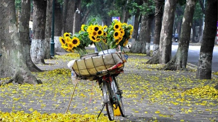 Plant, Flower, Blossom, Bicycle, Bike, Vehicle