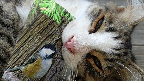Cat, Animal, Pet, Mammal, Kitten, Bird