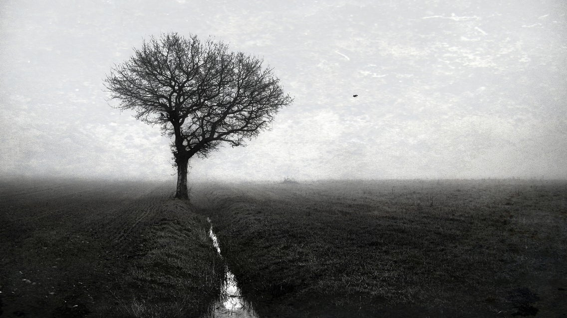 Nature, Tree, Plant, Fog, Weather, Outdoors