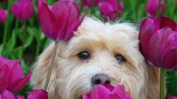 Plant, Flower, Blossom, Tulip, Spring, Petal