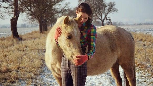 Horse, Mammal, Animal, Colt Horse, Person, Human