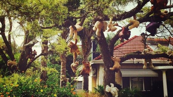 Tree, Plant, Zoo, Animal, Outdoors, Vegetation