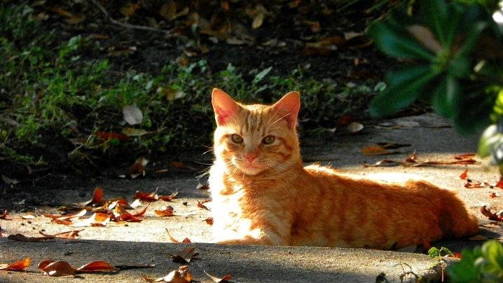 Leaf, Plant, Cat, Mammal, Pet, Animal