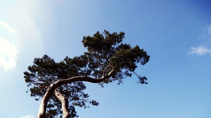 Tree, Plant, Tree Trunk, Outdoors, Vegetation