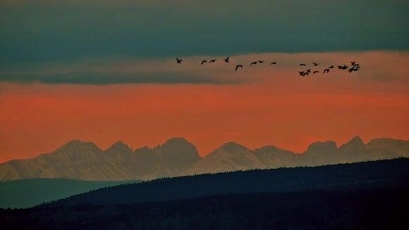 Nature, Outdoors, Mountain Range, Mountain, Bird, Animal