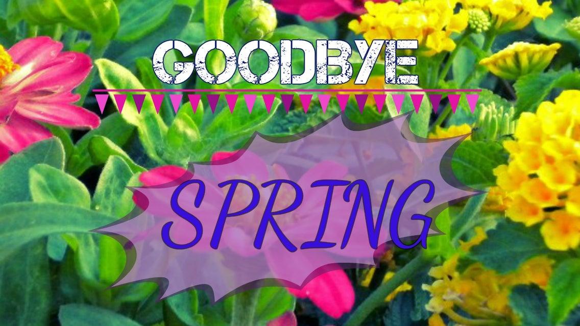 Plant, Flower, Blossom, Potted Plant, Vase, Jar
