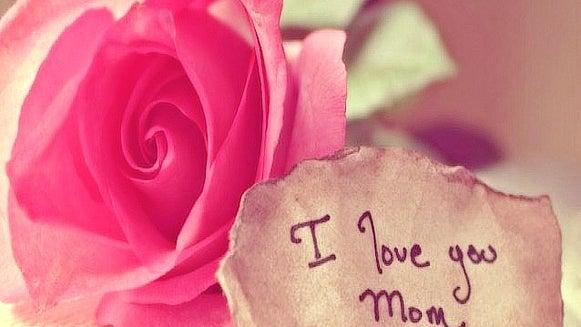 Rose, Plant, Flower, Blossom