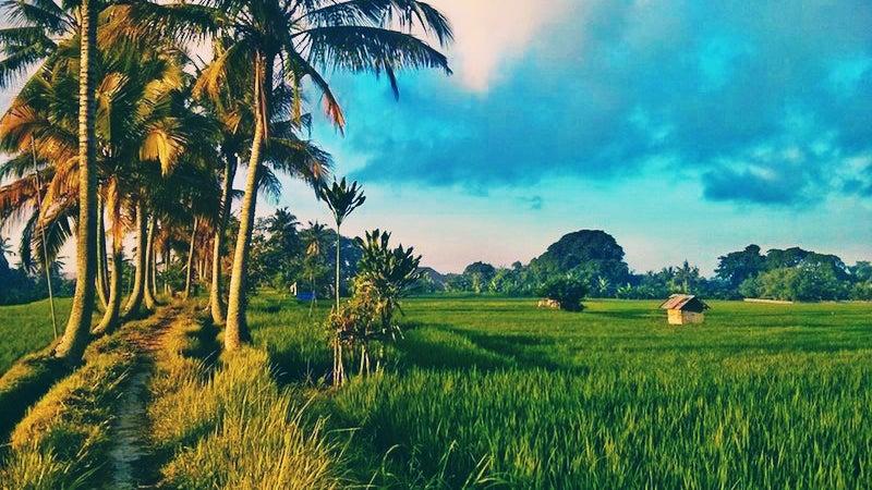 Grassland, Field, Outdoors, Nature, Summer, Paddy Field
