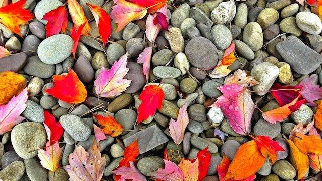 Leaf, Plant, Pebble, Petal, Flower, Blossom