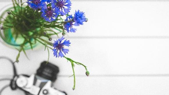 Plant, Aster, Flower, Blossom