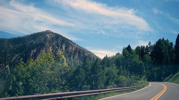 Road, Highway, Freeway, Fir, Abies, Plant