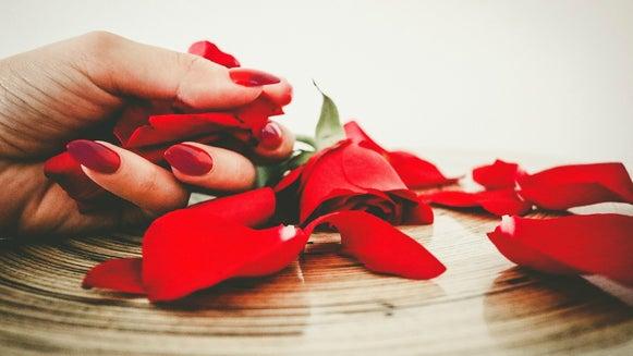 Petal, Plant, Flower, Blossom, Person, Human