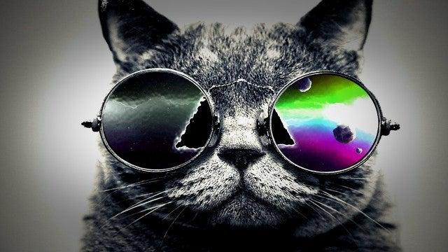Cat, Animal, Mammal, Pet, Sunglasses, Accessories