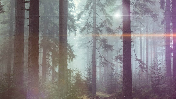 Nature, Weather, Fog, Outdoors, Tree, Plant