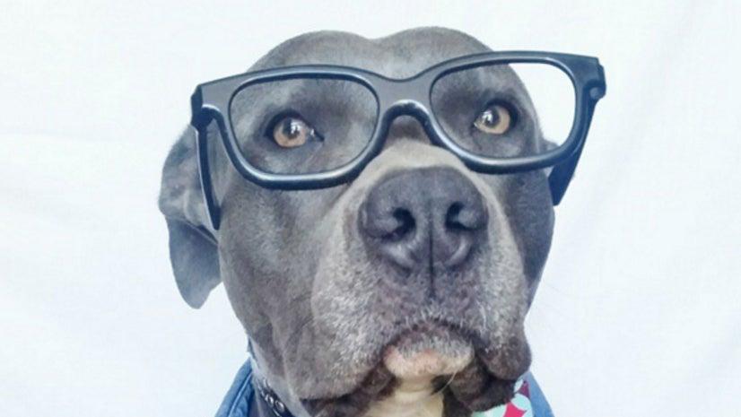 Glasses, Accessories, Accessory, Person, Human, Canine