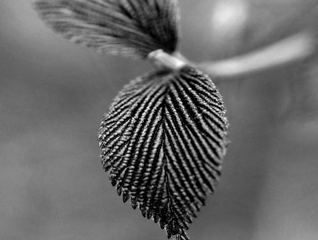 enhance texture with black and white photography