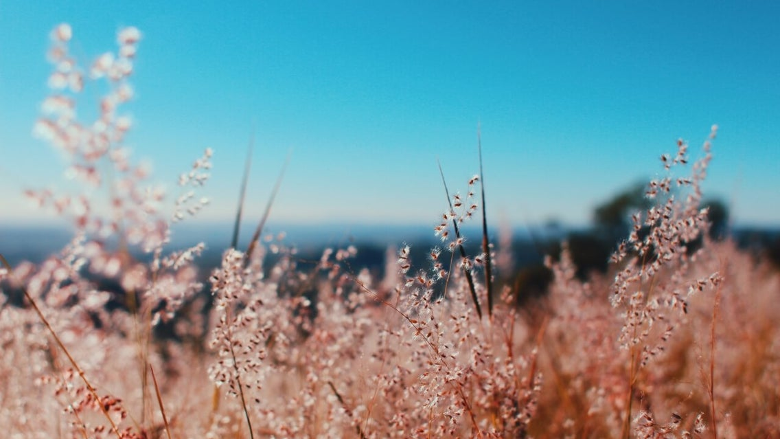 Grass, Plant, Vegetation, Lawn, Nature, Outdoors