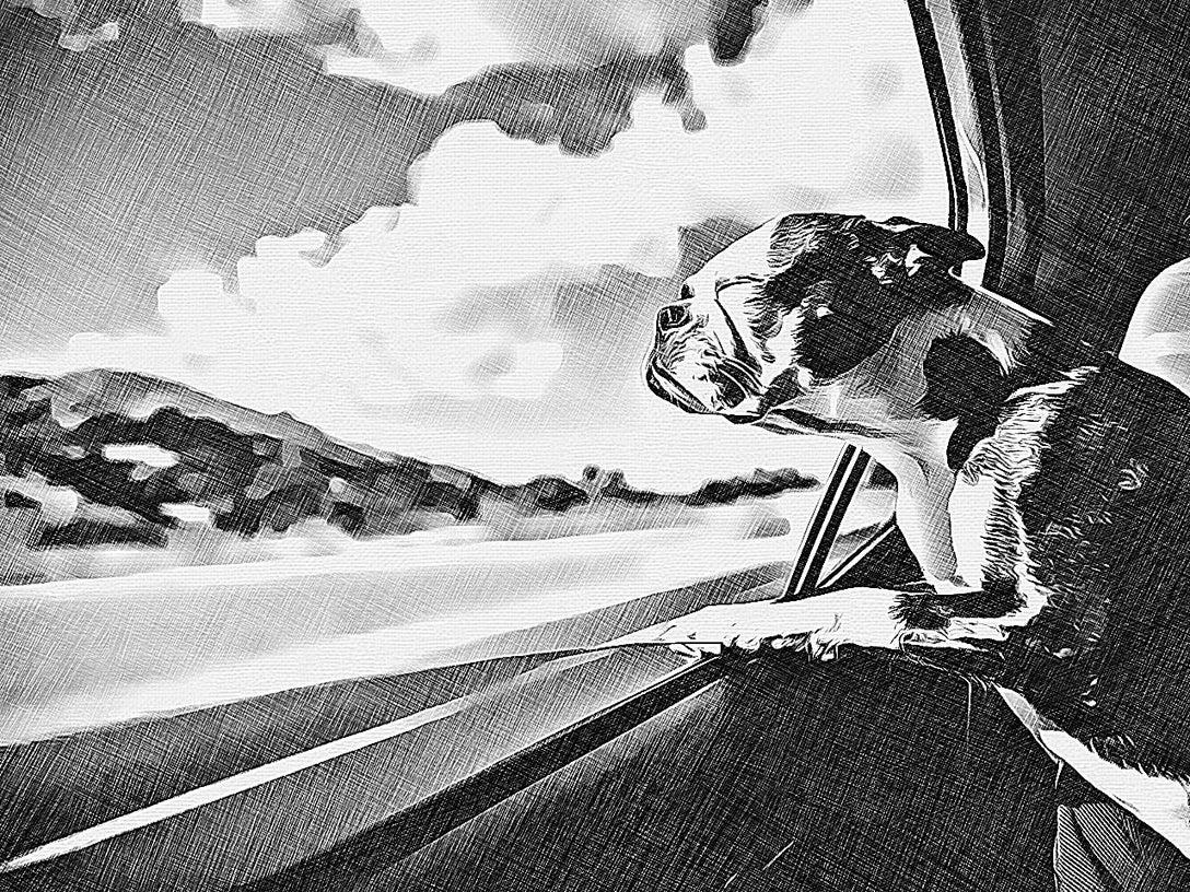 cross hatch photo effect by BeFunky