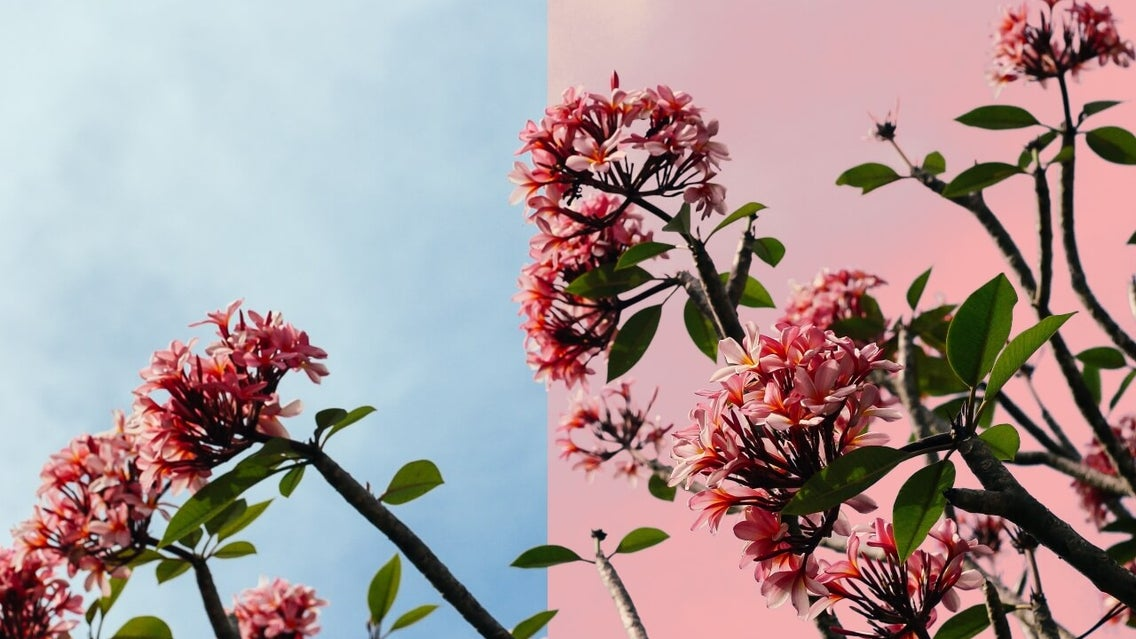 how to replace colors in photos with BeFunky
